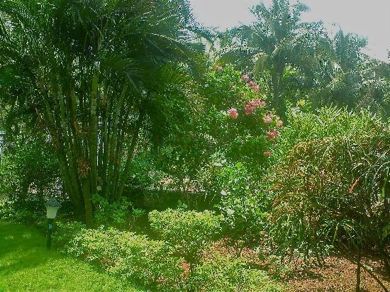Casa Ligorio Holiday Place : Garden Casa Ligorio