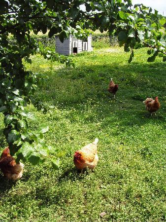 Green Orchard: You know where your breakfast eggs come from!