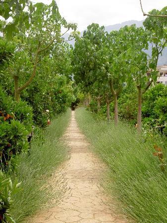 Ca's Curial: Pathway in the garden
