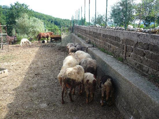 Italy Farm Stay: Part of the animals that are kept in the farm