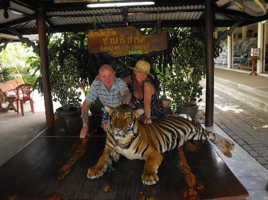 Boo the tiger - Picture of Safari Park Open Zoo, Kanchanaburi - TripAdvisor