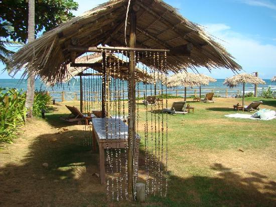 Pousada Farol das Tartarugas: Hotel garden, with sun loungers and parasols