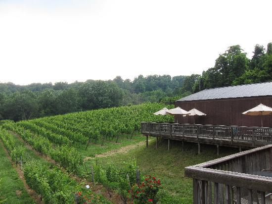 Chateau O'Brien: Beautiful view from the deck