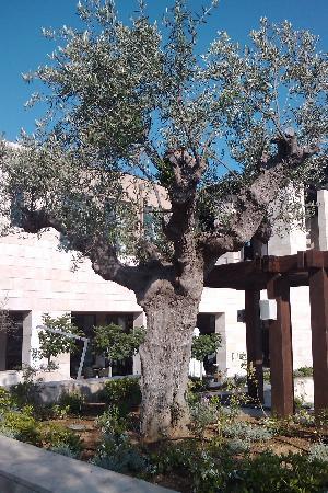 Costa Navarino, Grecia: Pero restaurant