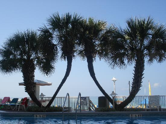 Palmetto Inn & Suites: Beautiful poolside view