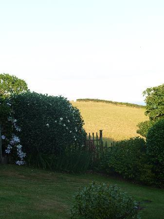 views of frogwell garden