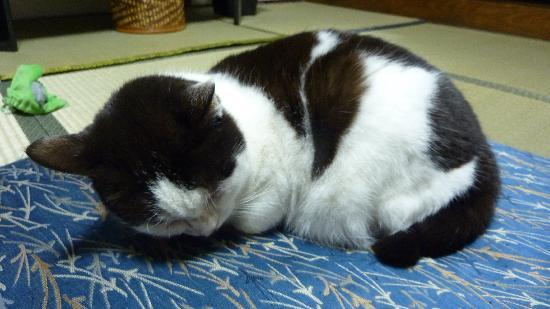 Tama Ryokan : Cat that kept walking into our room