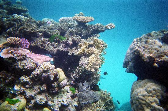 Silverswift Dive & Snorkel: Beautiful reef, taken with an instant camera.