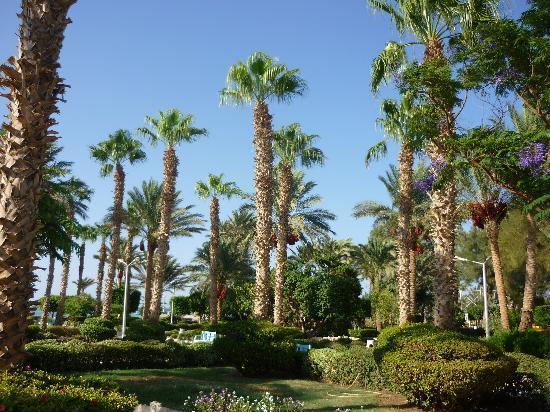 die traumhafte gartenanlage  Festival Shedwan Golden Beach Resort 3*, Єгипет,  Хургада - photo
