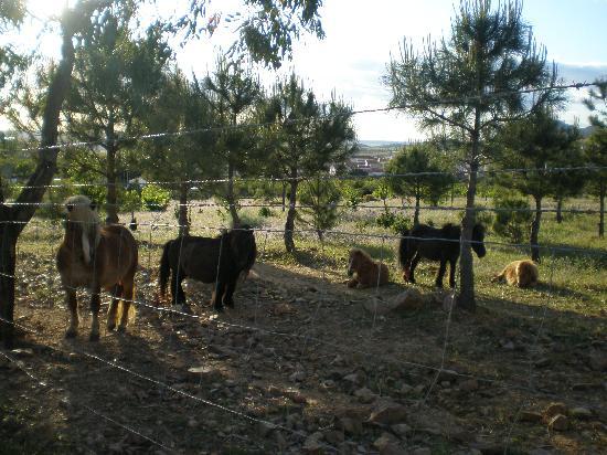 Extremadura, España: centro Hipico
