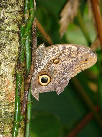 Bocas Butterfly Garden : Butterfly