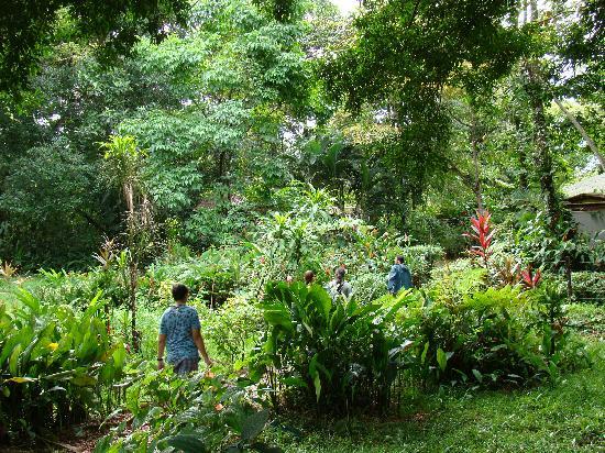 Bocas Butterfly Garden : Garden