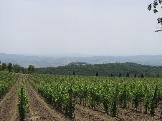 In Toscana - Day Tours: 雄大な自然の中のすてきなワイナリーを訪問