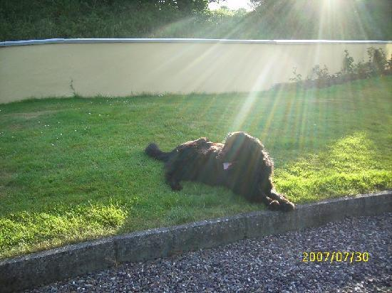 YOU WILL SURELY MEET BEAUTIFUL BENSON AT ARD NA GREINE