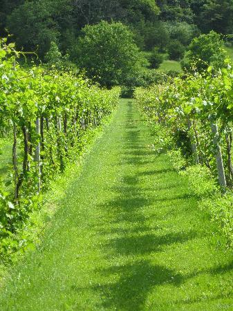 Galena Cellars Winery & Vineyard: Vines in bloom!