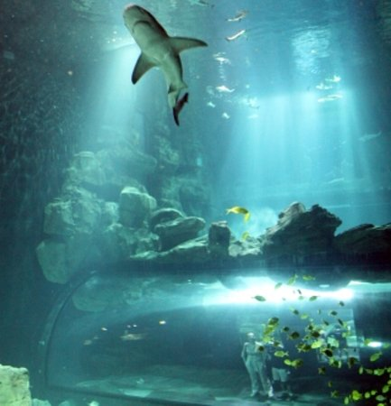 aquarium de cineaqua ce qu il faut savoir tripadvisor