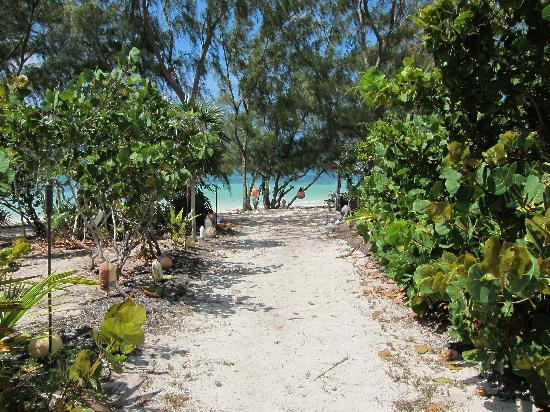 Flamingo Bay Club: Path to beach at Flamingo Bay