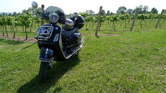 Nutbourne Vineyard: Vespa in vineyard