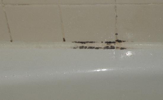 Motel 6 Philadelphia,PA-Brooklawn: mold on tub