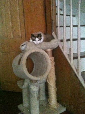 New Market B&B: cat
