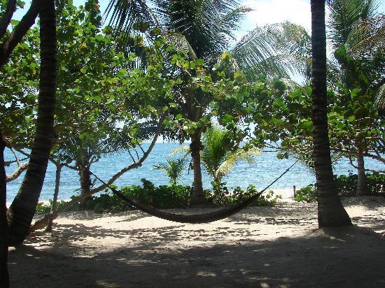 hammocks swing in the breeze between coconut laden palm