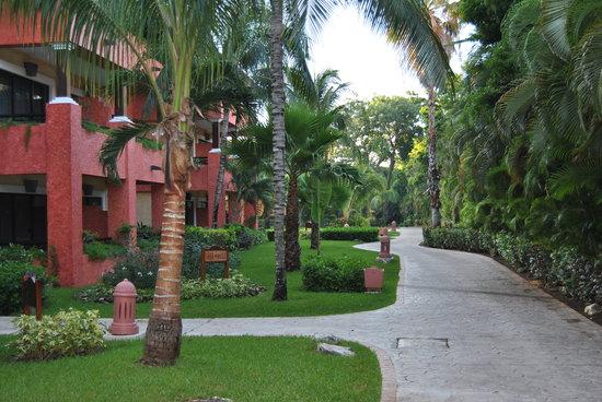 Iberostar Tucan Hotel : Habitaciones y camino a la piscina