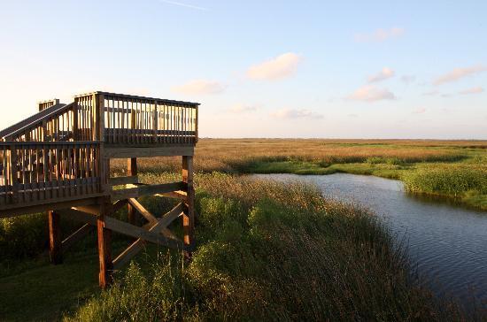 Louisiana: Sabine Wetlands Walk, Hackberry