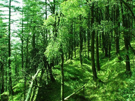 Wildflower Hall, Shimla in the Himalayas : The woods during my walk