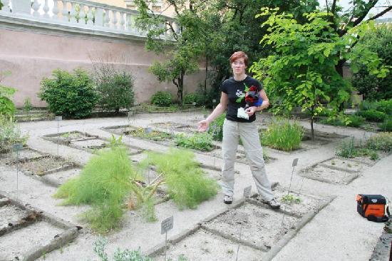 L orto botanico di padova il più antico del mondo