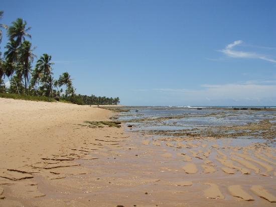Pousada Farol das Tartarugas: Praia do Forte Beach's scene
