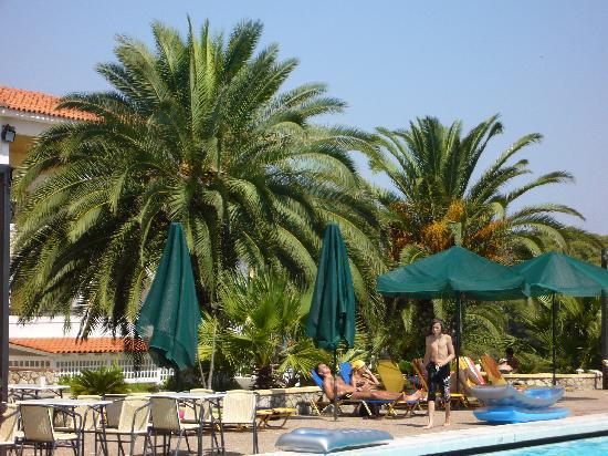 Aristoteles Beach Hotel: Pool and palms