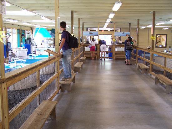 Georgia Sea Turtle Center: Hospital