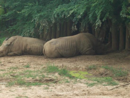 The Jackson Zoo: the poor rhinos