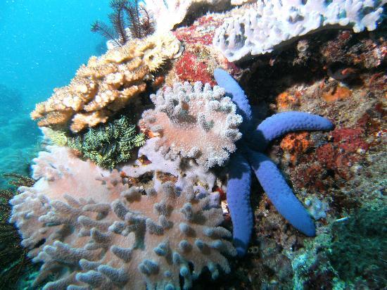 El Galleon Beach Resort & Hotel: Colorful reef