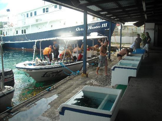 Koror, Palaos: Dunk tanks & boat