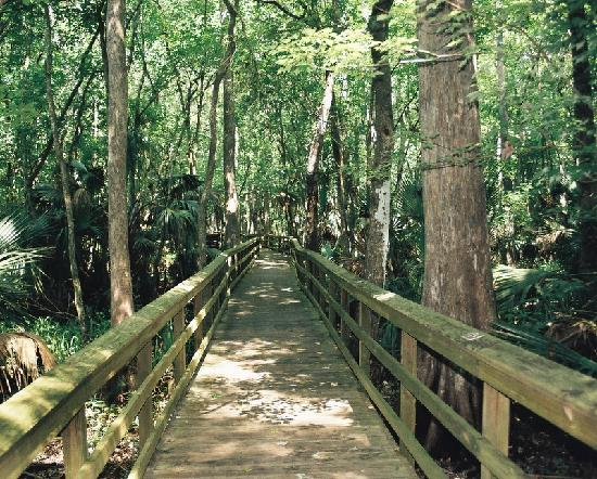 Highlands Hammock State Park: The Cyprus Swamp Trail Boardwalk