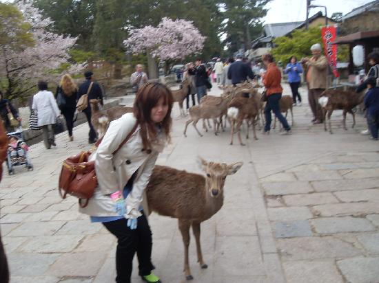 Japão: deer at nara