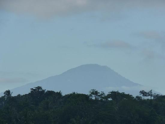 Villa Indah Ubud : View from verandah