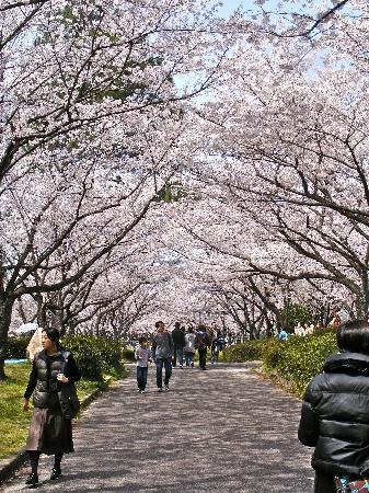 Higashiyama Zoo & Botanical Garden: Cherry blossom viewing in April.