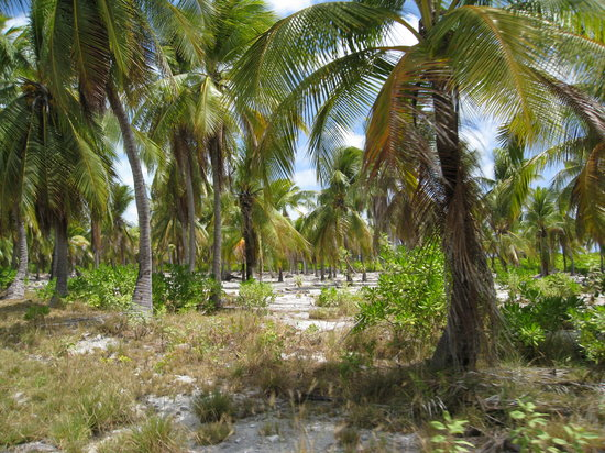 Tarawa Atoll, Republic of Kiribati: The beach is through these trees, Amazing when you first see it