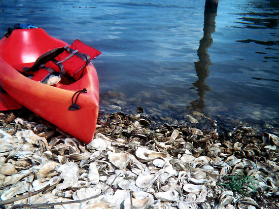 BeachnRiver Canoe and Kayak Rentals: Oyster beach