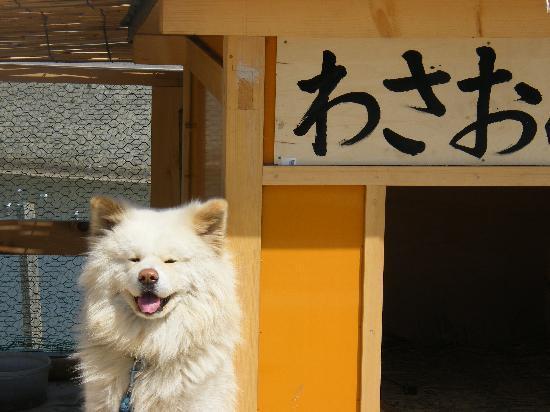 Ajigasawa-machi, Japón: ワサオ君です