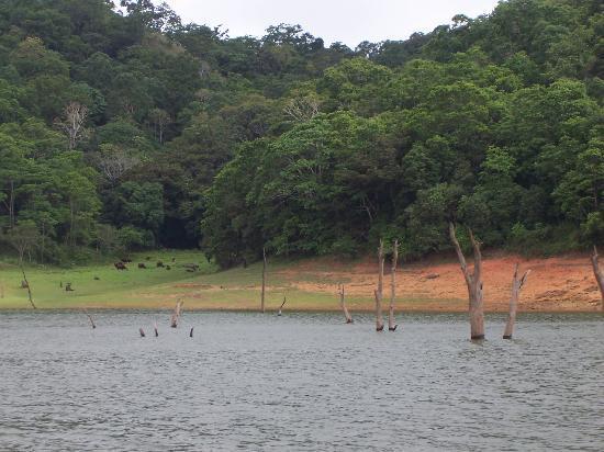 Club Mahindra Tusker Trails: Periyar Lake