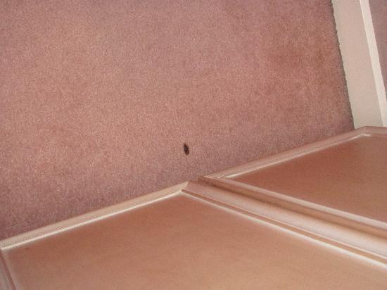 Le Parthenon Hotel: Stains on carpet