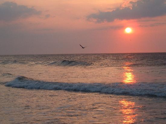 Carolina Beach State Park: Sunrise, Carolina Beach
