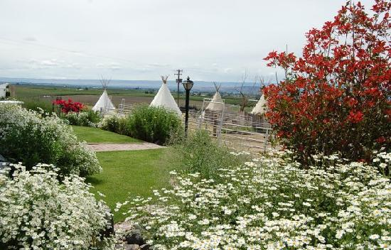 Cherry Wood Bed Breakfast and Barn: Looking toward the teepees from the side of the house