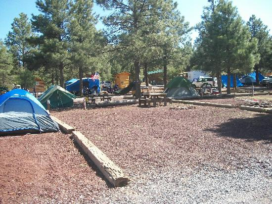 Williams / Circle Pines KOA Campground : Tent Camping - No Privacy