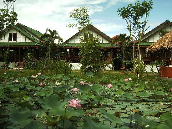 Secret Garden Chiang Mai: les  bungalows et les lotus