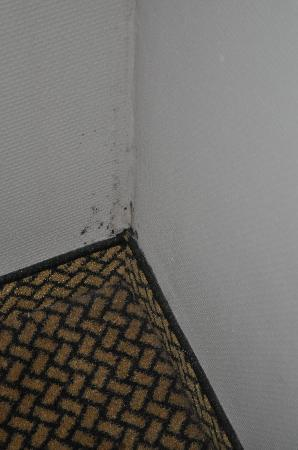 Century Hotel: mould on walls