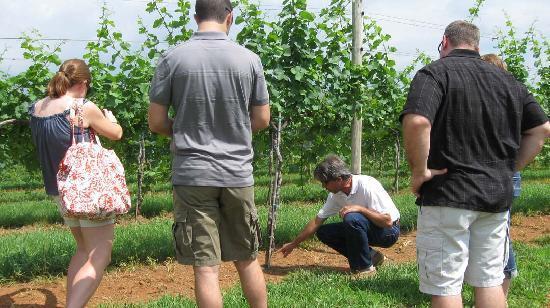 Charlottesville, VA: Arcady Guide Chris explains vines